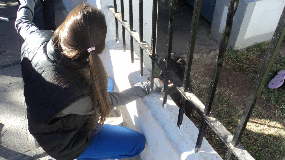 Prevencion canina en el barrio