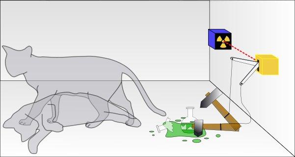 gato-schrodinger-cerrada